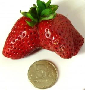 ягодка4.jpg