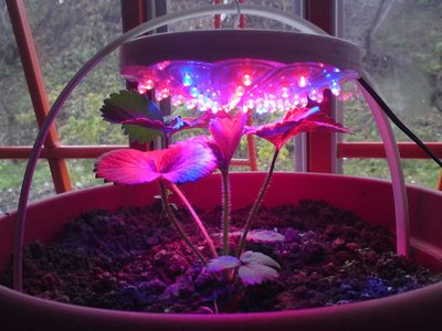 led-grow-light-5.jpg