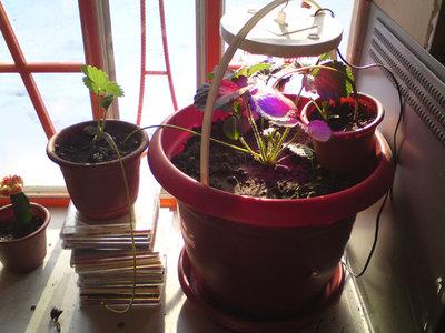 led-grow-light-6.jpg
