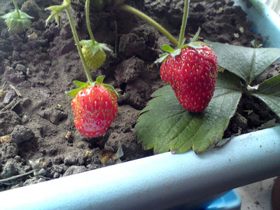 led-stawberry.jpg