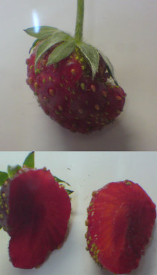 led-stawberry-1.jpg