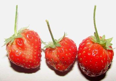 led-stawberry-2.jpg