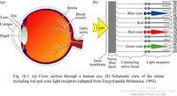 F16-01 Human eye.jpg